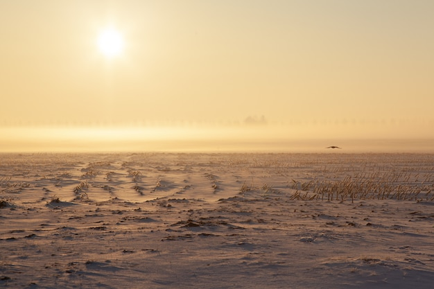 Leeg sneeuwgebied met mist
