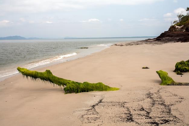 Leeg strand met boomstammen bedekt met zeewier in het zand