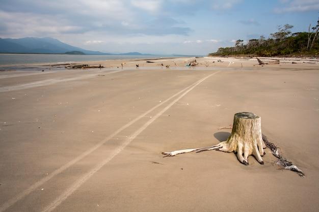 Leeg strand met boomstammen in het zand en wielmarkeringen