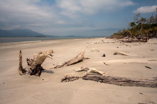 Leeg strand met boomstammen in het zand