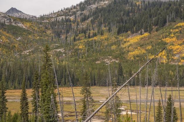 Leeg veld met een berg bedekt met verschillende kleuren bomen