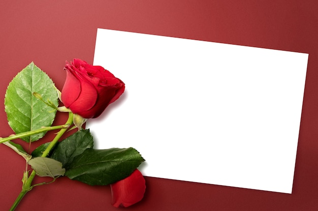 Leeg wit papier en rode roos met een gekleurde muur. valentijnsdag. lege ruimte voor exemplaarruimte