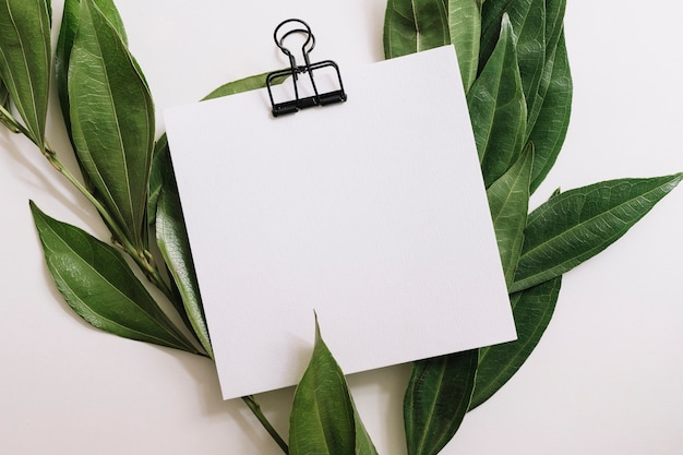 Leeg witboek met zwarte paperclip die met groene bladeren op witte achtergrond wordt verfraaid
