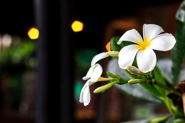 Leelawadee bloem