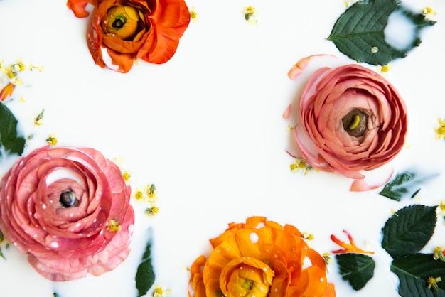 Leg mooie boterbloembloemen en bladeren plat in het melkbad