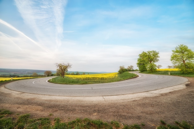 Lege asfaltweg en bloemengebied van gele bloemen