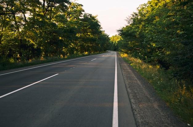 Lege asfaltweg in het bos in de avond