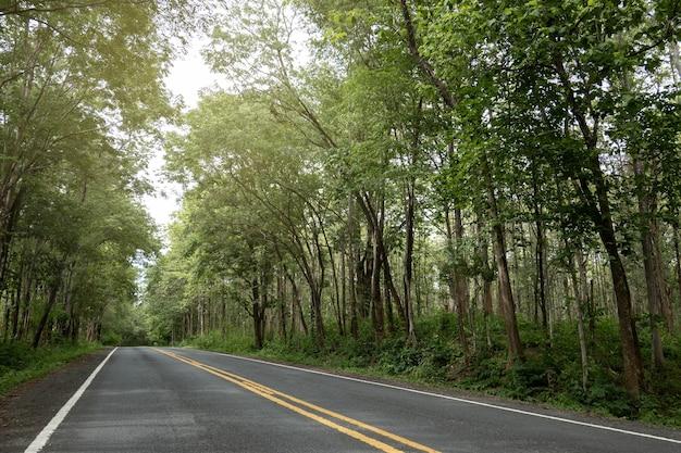 Lege asfaltweg richting het groene bos.