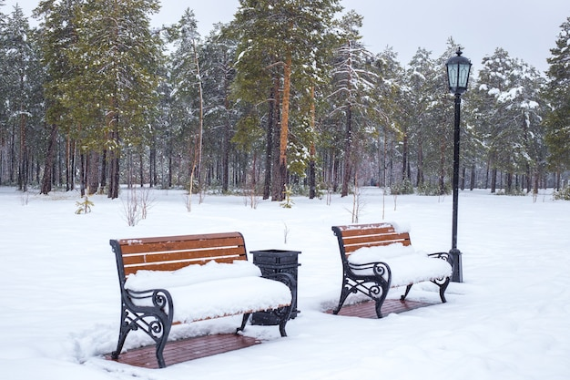 Lege houten banken bedekt met sneeuw in winter park