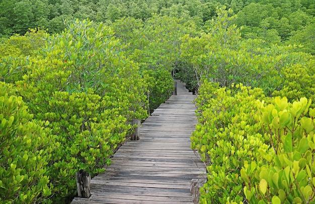Lege houten promenade onder de levendige groene mangrove