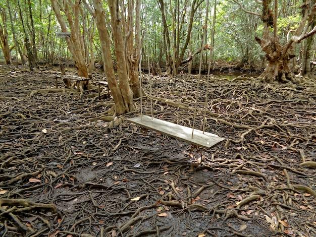 Lege houten schommel in mangrovebos