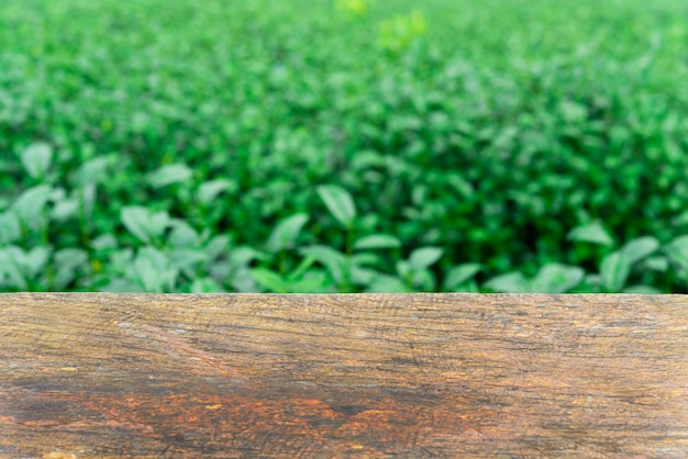 Lege houten tafel met verse groene theeblaadjes als achtergrond