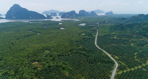 Lege krommeweg in rij van de tuin van de palmbomenaanplanting op hoge berg in phang nga thailand
