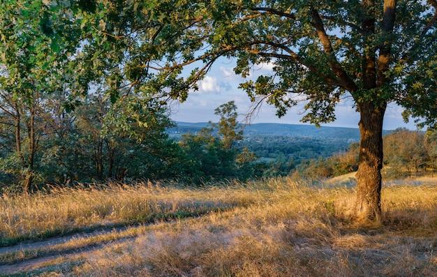 Lege landelijke weg door bos met droog gras en groene bomen