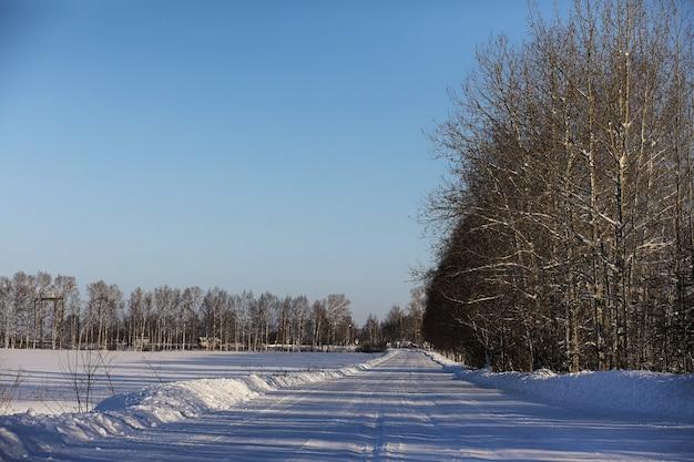 Lege landelijke weg in een bos in zonnige winterdag