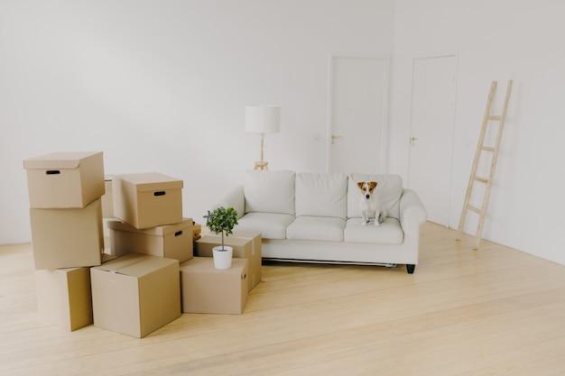 Lege lichte woonkamer met bank en huisdier erop, stapel onverpakte kartonnen dozen met persoonlijke bezittingen