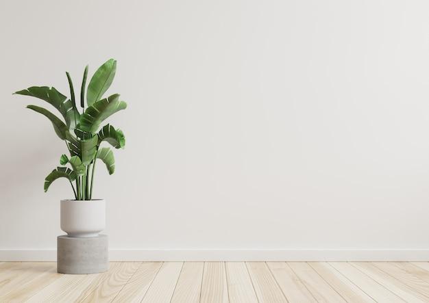 Lege ruimte met witte muur met plant