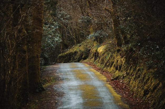 Lege smalle onverharde weg loopt door bladloos dik bos op koude herfstdag