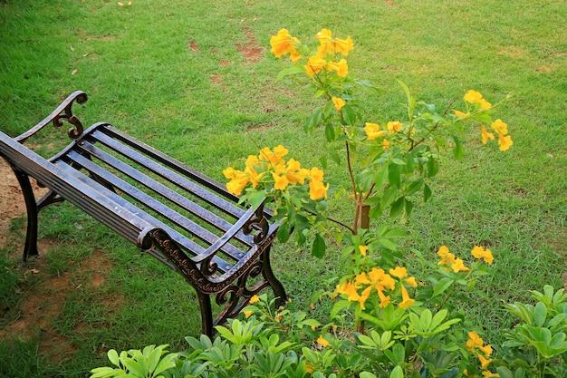 Lege smeedijzeren bank in lichte regen met wazige gele trompetbloemen op voorgrond