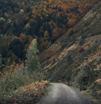 Lege weg in de bergen. irati forest in de herfst