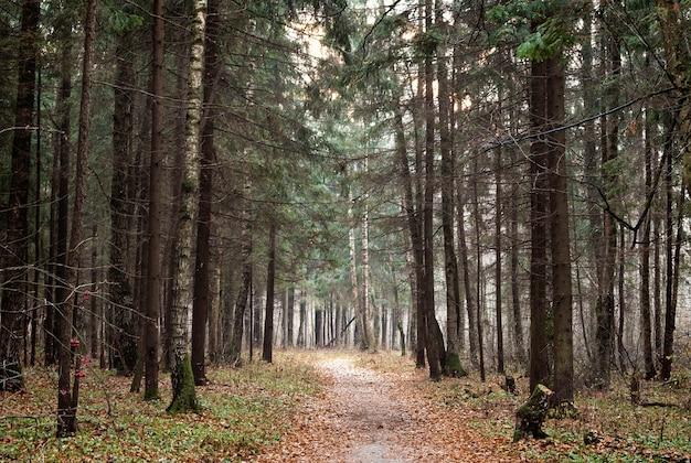 Lege weg in herfst bos natuurlijk landschap