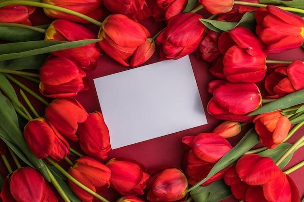 Lege wenskaart mock-up scène en rode tulpen op rood oppervlak