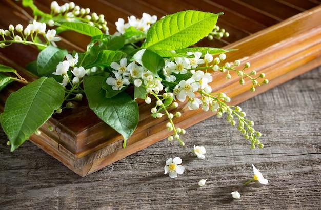 Lente achtergrond. mooie verse witte bloemen van gewone vogelkers op houten achtergrond. de lentebloem een vogelkers. kopieer ruimte.