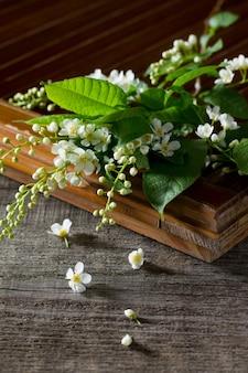 Lente achtergrond. mooie verse witte bloemen van gewone vogelkers op houten achtergrond. de lentebloem een vogelkers.