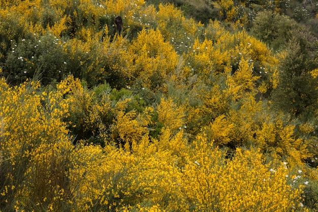 Lente algarve flora