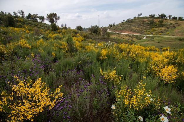 Lente algarve landschap flora