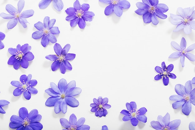 Lente blauwe bloemen op witte achtergrond