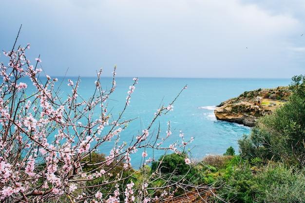 Lente bloeiende boom op een achtergrond van zee