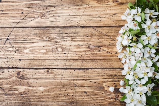 Lente bloeiende tak op hout