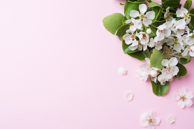 Lente bloeiende tak op roze