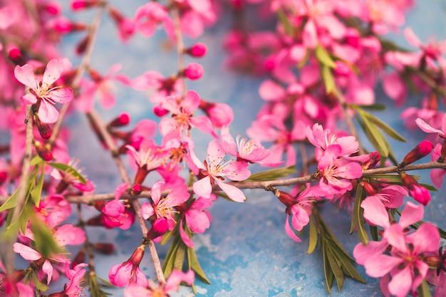 Lente bloeiende takken, roze bloemen op blauw