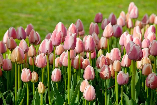 Lente bloem veld.