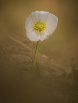 Lente bloem