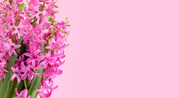 Lente bloemen compositie met roze hyacint bloemen op roze achtergrond, lege ruimte voor tekst aan de rechterkant. wenskaart met eerste lente geurige bloeiende planten.