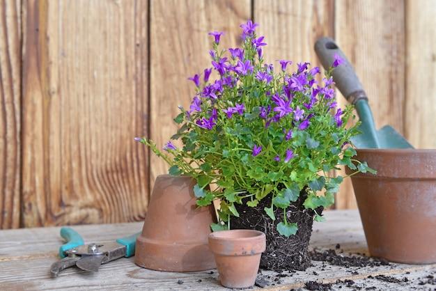 Lente bloemen en terracotta bloempotten met tuingereedschap fo oppotten op een houten tafel