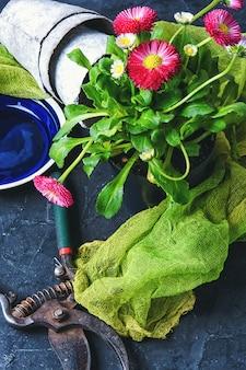 Lente bloemen en tuingereedschap