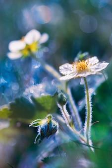 Lente bloemen in dauw vroeg in de ochtend