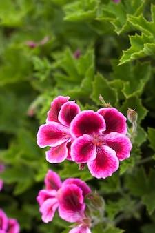 Lente bloemen met verse groene bladeren achtergrond