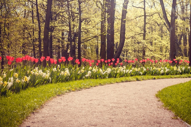 Lente bloemen rode tulpen. prachtige rode bloemen.