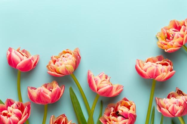 Lente bloemen. tulpen op pastelkleuren.