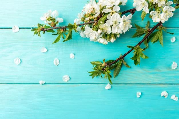Lente bloesem kersen takken op blauwe houten achtergrond.