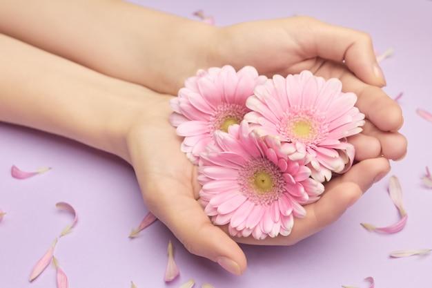 Lente boeket van gerbera bloemen in handen van de vrouw op een violet d met kleine roze bloemblaadjes voel lente concept. vrouweninzichten over huidverzorging.
