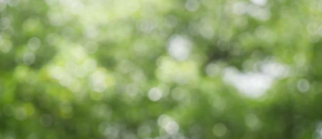 Lente bokeh natuur abstracte achtergrond groene bladeren wazig, mooi in de lente of zomer