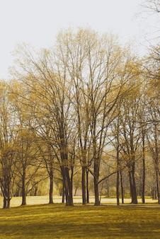 Lente bomen in het park