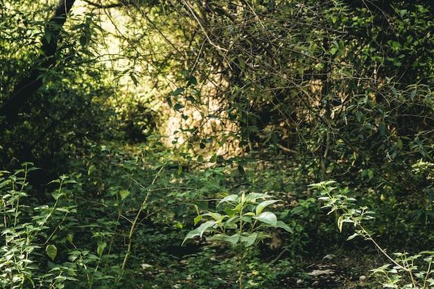 Lente boom pijn lichte houten omgeving