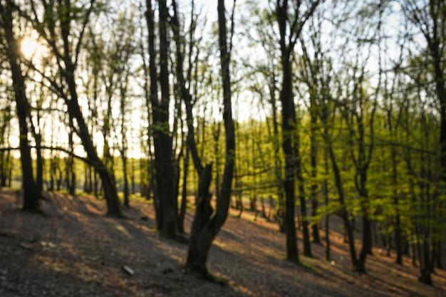 Lente bos bij zonsondergang. jonge groene bladeren.